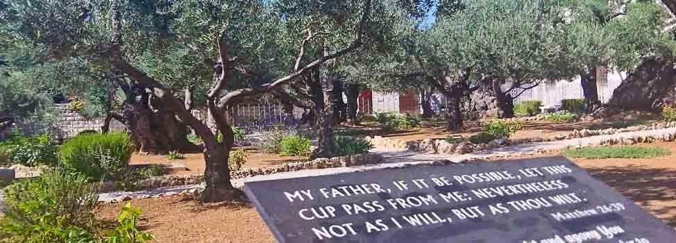 Mt. Olives