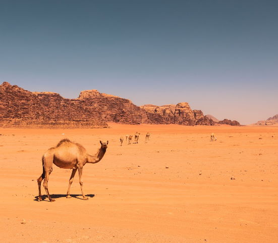 Israel, Petra & Wadi Rum 8 Day Discovery Package